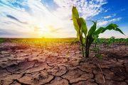 تشنگی مزارع در پُر باران ترین استان کشور